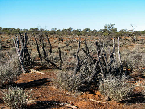 Yalgoo Burial Ground