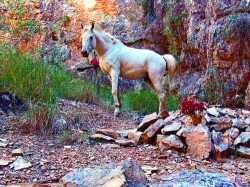 WALKER, Roy Lionel Died 20.11.2006 buried Roys Retreat Argyle Kimberley - Photo Barbara Walker Aug 2007