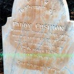 CUSHION Paddy